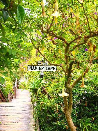 napier-lane