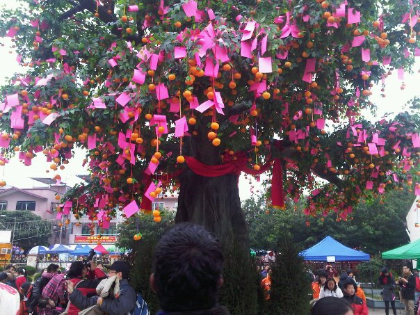 Wishing Tree in the Lam Tsuen village in Hong Kong