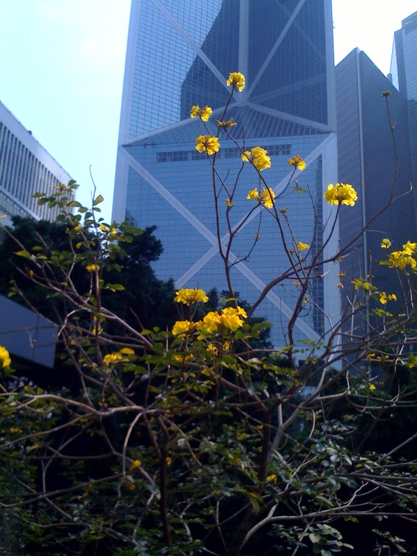 A Splash of Spring in front of the Pointed Bank of China Building