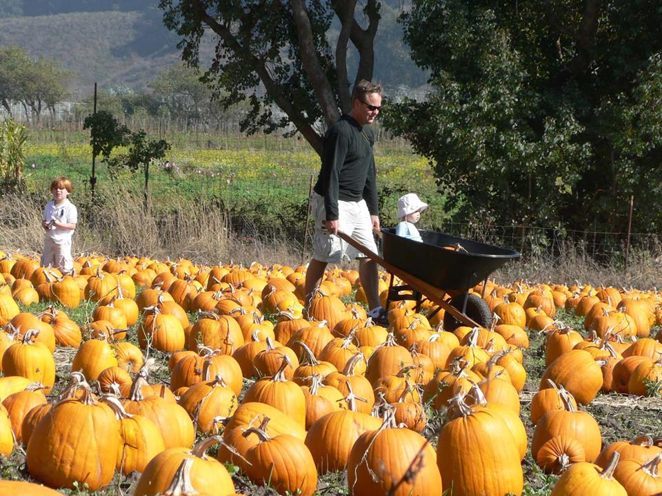 Pumpkin Festival on October 19-20 - another fun and busy day