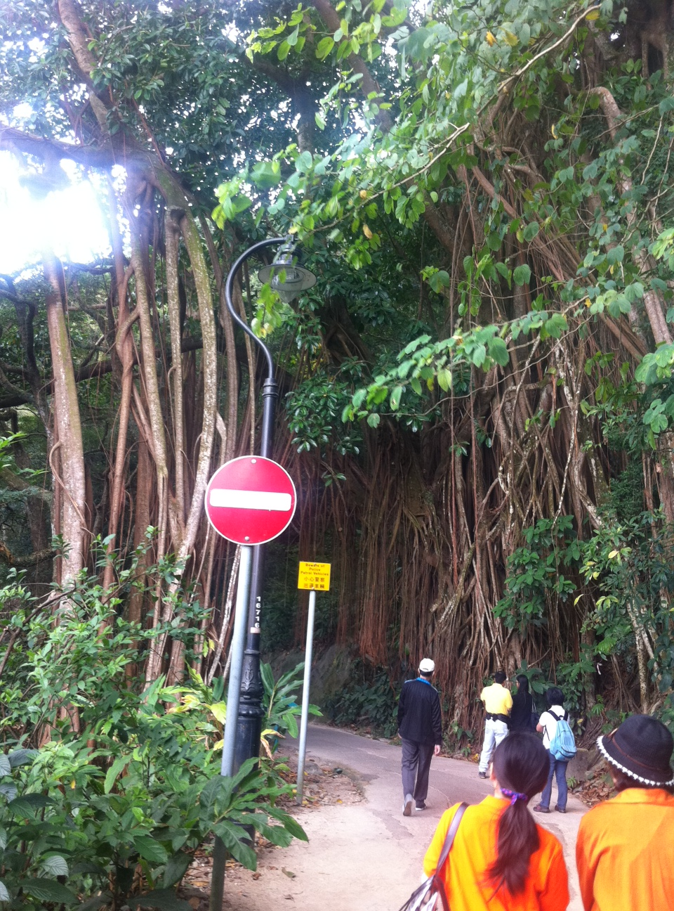 Large trees over the walkway like a gate