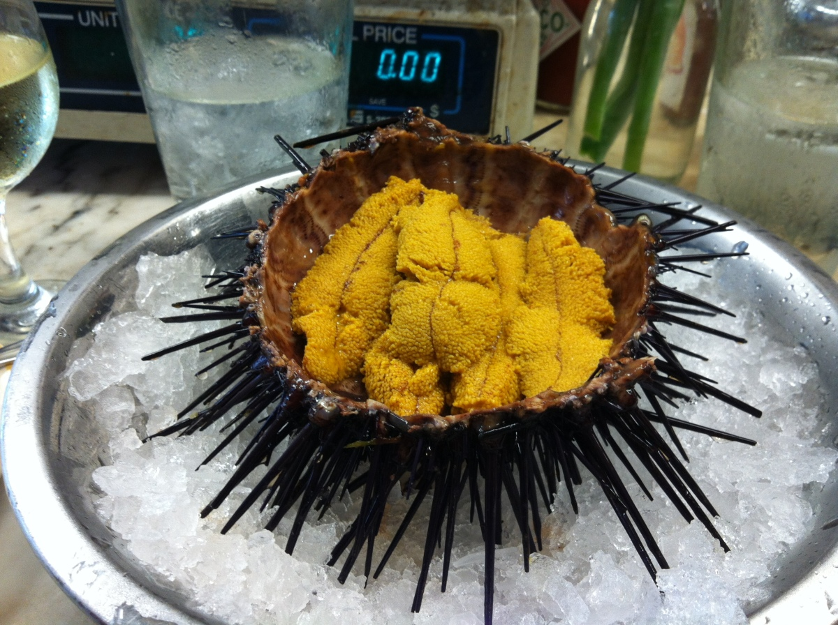 I think sea urchins in their raw forms are cute, not scarry!