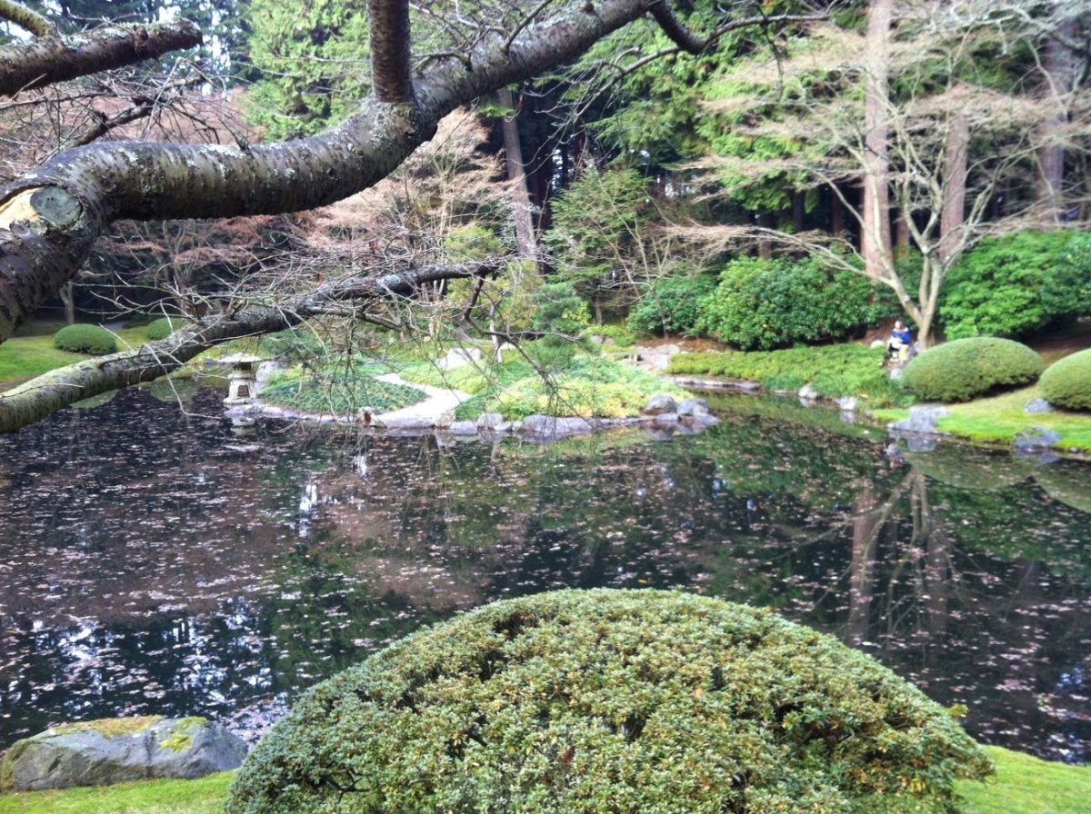 UBC Japanese garden No 12
